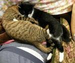 猫抱き合い