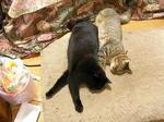 猫シンクロ2